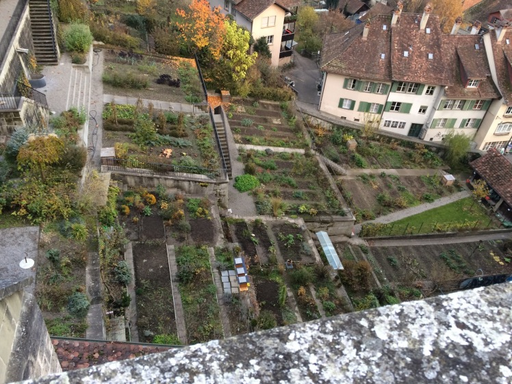 Terraced vegetable gardens.  The Swiss will garden anywhere they can.